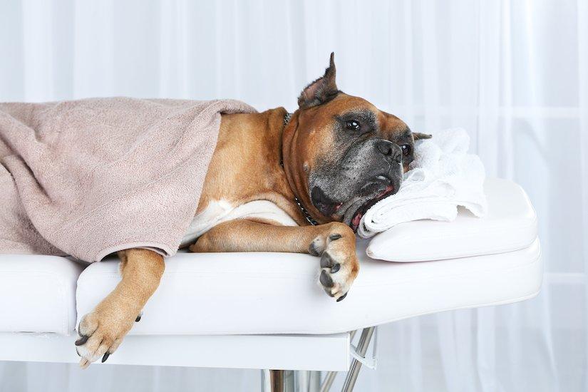 Biologische Therapien bei Hunden