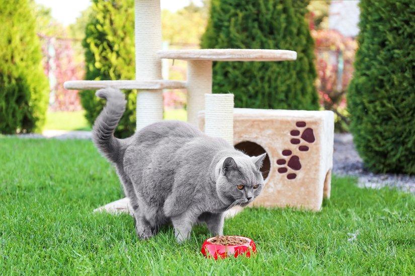 Dickere Katze mit Schale voll Trockenfutter