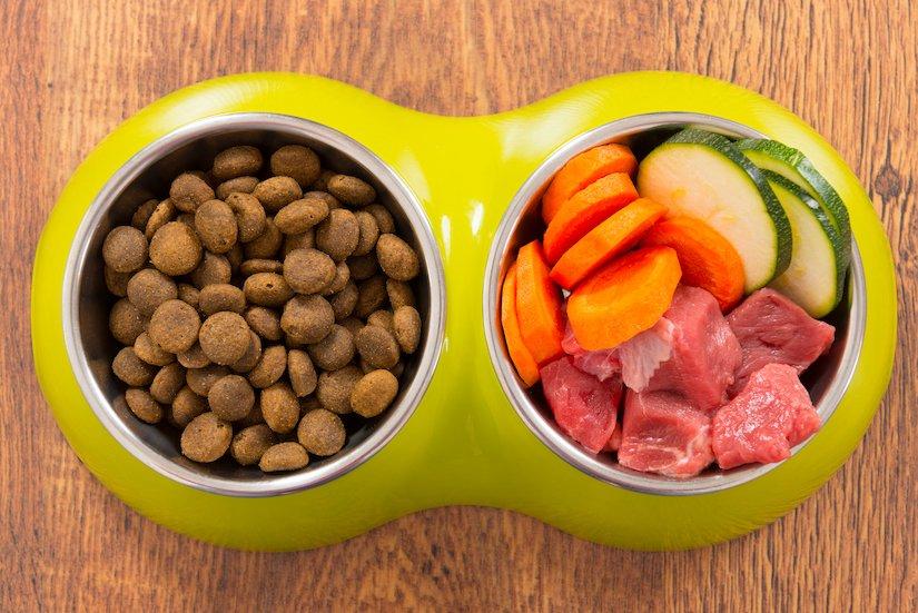 Frischfleisch oder Trockenfutter für die Katze