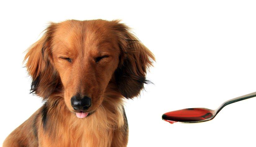 Hund bekommt Medikament in flüssiger Form