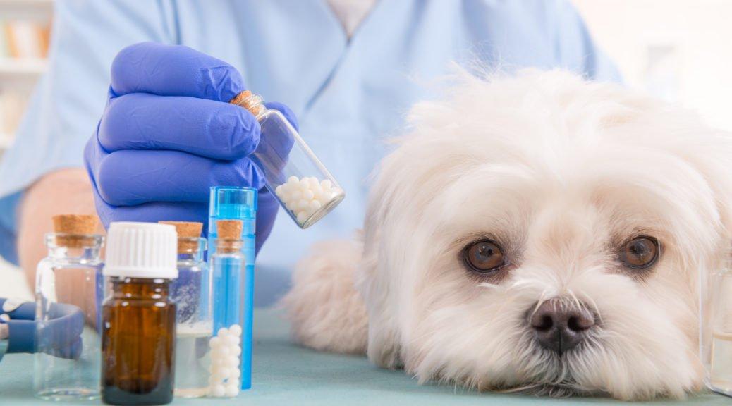 Klassische Homöopathie fuer Hunde